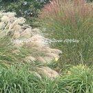 """Grasses 5"""" X 7"""""""
