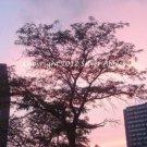 """A Tree Grows In Louisville II 8"""" X 10"""""""