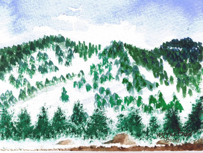 008 PRINT - Pines in the Snow (Original not available)