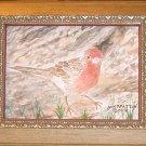 056 House Finch, framed