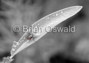 Fly Leaf 01 Selective Color - 5x7