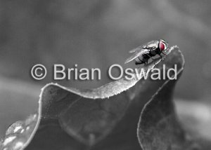 Fly Leaf 02 Selective Color - 8x10