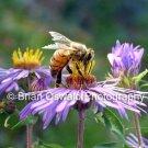 Spring Pollinator - 5x7