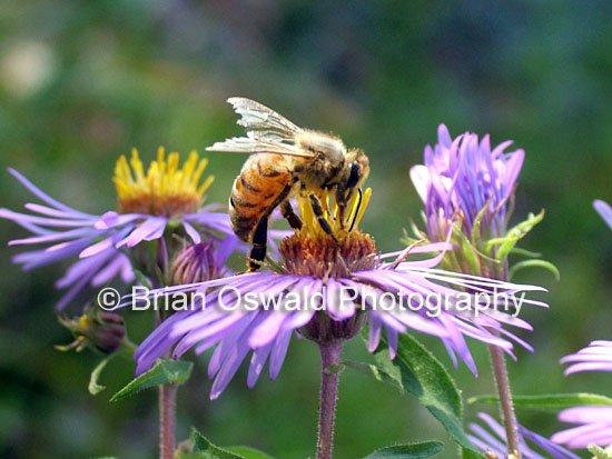 Spring Pollinator - 8x10