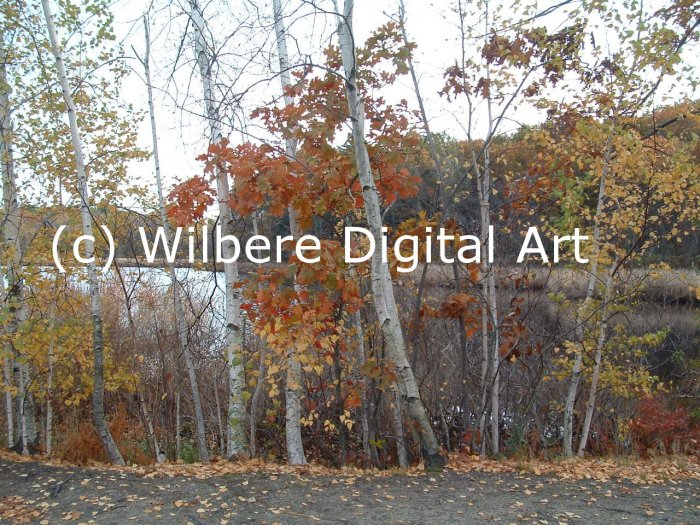 Digital Art JPG Photo Cutler Park Charles River Scene Early Fall No. 1