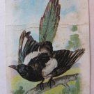 Vintage Magpie Arm & Hammer Church & Co New York Soda Card New Birds No. 6 Hy Hintermeister Artist