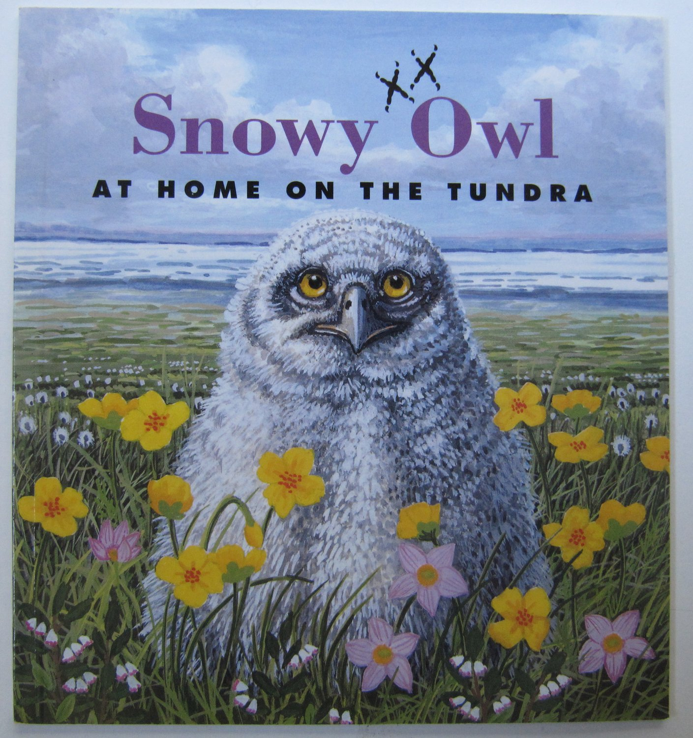 Snowy Owl At Home On The Tundra By Sarah Toast Children S