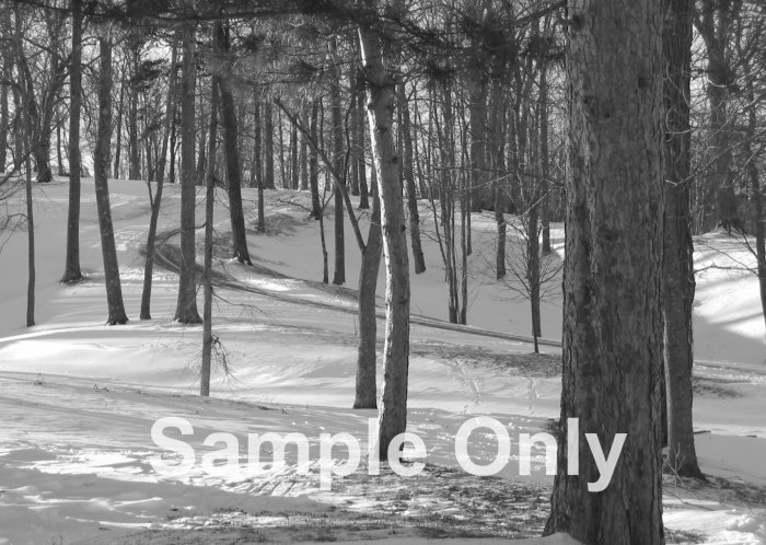 """Winter Pines"" - 5x7 - Original Black and White Photo - signed"