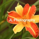 """Starburst"" - 8x10 - Original Floral Color Photo - signed"