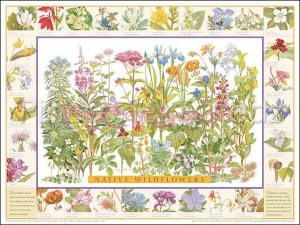 Wildflowers ID Poster ~ North East US & Canada