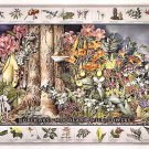 Wildflowers ID Poster ~ Western US