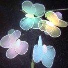 One Dozen Italian Butterfly Confetti Favor