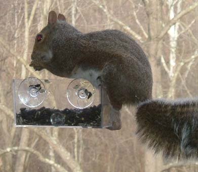 SQUIRREL-PROOF WINDOW BIRD FEEDERS MAKE AWESOME GIFTS AND EVEN TAP ON THE WINDOW WHEN A BIRD LANDS!
