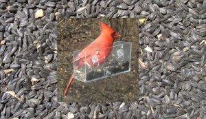 BLACK OIL SUNFLOWER SEED (1 pound) and NEW Window Bird Feeder