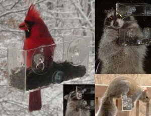 SQUIRREL BEAR & RACCOON BIRD FEEDER (Create YOUR OWN WILDLIFE AREA with this Window Bird Feeder)