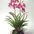 Purple Cymbidium Orchid Home Decor Handmade Flower - Luna Clay
