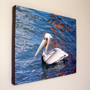 Pelican in White - Photo Close Up 16 x 20 in. Gallery Wrap Canvas Print