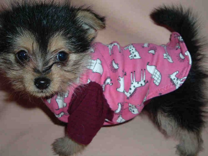 LITTLE ANIMALS T-SHIRT FITS T-CUP SIZE DOG FREE USA SHIPPING