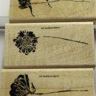 Stampin Up More Petal Prints