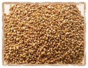 Alfalfa seed whole, Cert. Org. 1 Pound