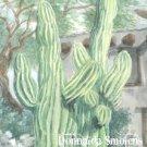 Cabot's 27 watercolor by Donnalda Smolens