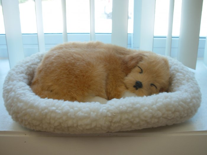 Pet Nap Golden Retriever Puppy Realistic Breathable Sleeping Dog Suffed Animals