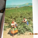 italian swiss colony vineyard scene asti california