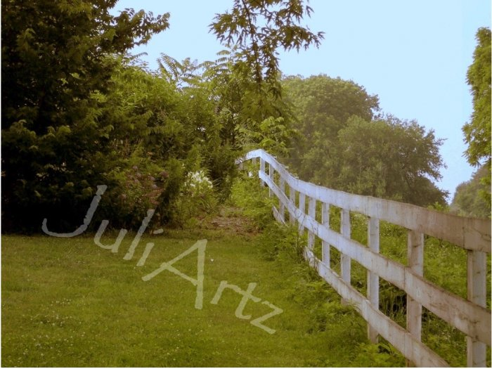 BEYOND THE FENCE - photographic art - 8 x 10 photographic print
