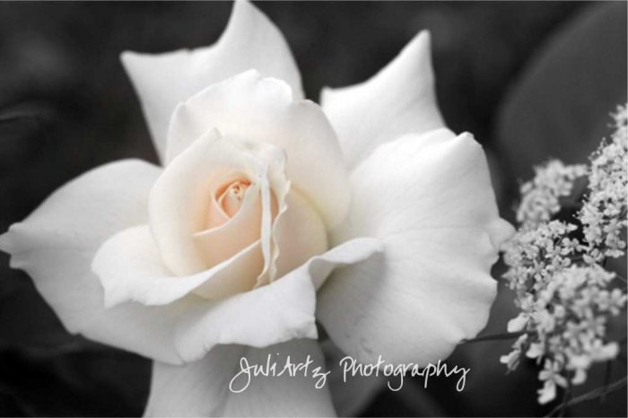 A Touch of Love - 8 x 10 Original Photographic Print