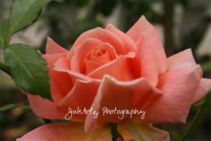 Peach Beauty - 8 x 10 Original Photograhic Print