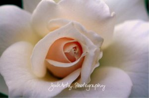 Soft Love - 8 x 10 Original Photographic Print