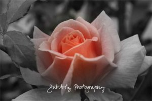 A Touch of Color - 8 x 10 Original Photographic Print