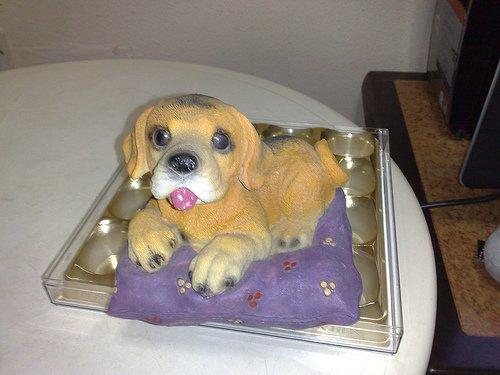 Dog On Blanket Coinbank