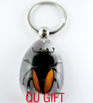 Real Insect Bug Amber Lucite Key Chain Gold Beetle