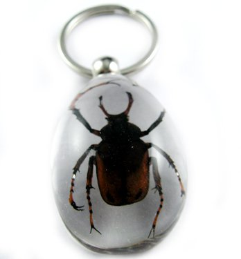 Real Insect Bug Amber lucite Key Chain Brown Beetle