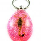 Pink Real Insect Bug Amber Lucite Key Chain Scorpio