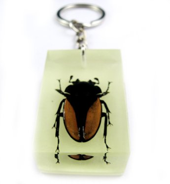 Rectangle Real Insect Bug Amber Key Chain Gold Beetle