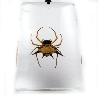 Rectangle Insect Bug Amber Necklace Pendant Spider
