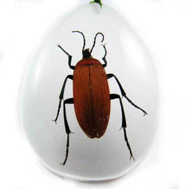 Real Insect Bug Amber Necklace Pendant Big Brown Beetle