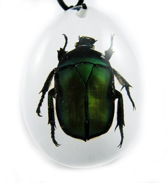 Insect Bug Amber Lucite Necklace Pendant Green Beetle
