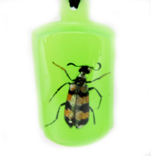 Green Amber Real Insect Bug Charm Key Chain Keyring NO.1