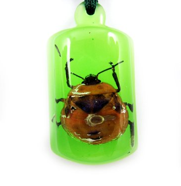 Green Amber Real Insect Bug Charm Key Chain Keyring NO.3