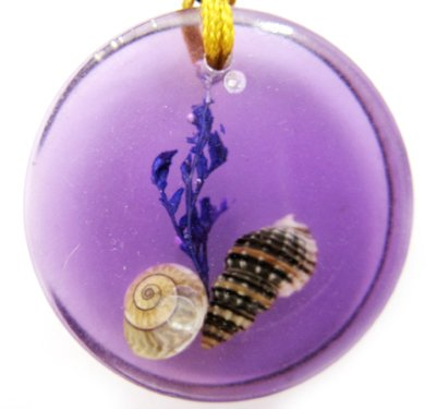 Round Amber Real Seashell Necklace Pendant Multi-color NO.7