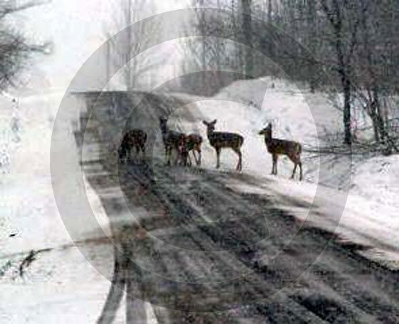 Morning Run - 11020 - 8x10 Framed Photo