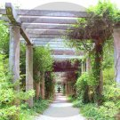 The Pergola - Airlie Gardens - 8017 - 11x17 Framed Photo