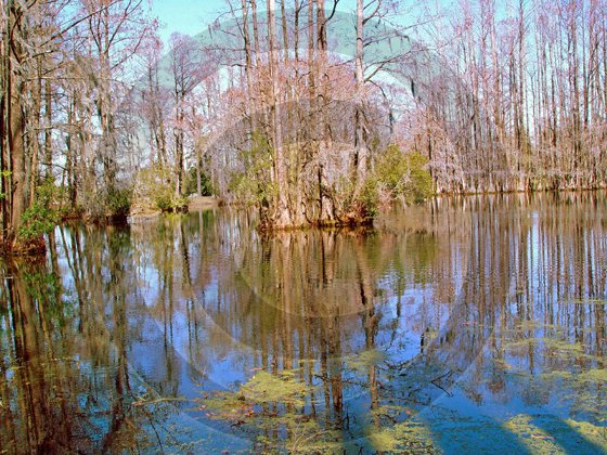 Lakes - Greenfield Lake - 8024 - 11x17 Framed Photo