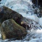 Spring Run Off - Ilion Gorge - 6012 - 11x17 Framed Photo