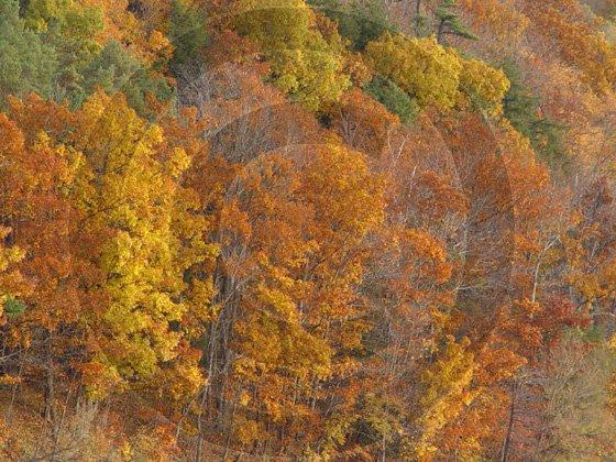 Fall Leaves - Ostego Lake - 11012 - 11x17 Photo