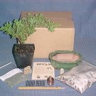 Juniper Procumbens Nana Bonsai Tree Kit