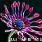 Ebay Store Logo Pink blue Cactus Flower Dress Up your Ebay Store Add your Store Name!!